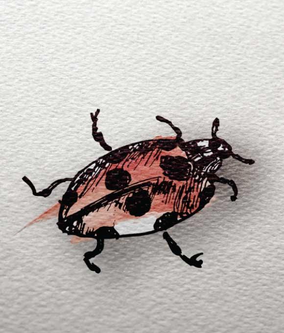 project-my-backyard-photography-ladybug-gallery2